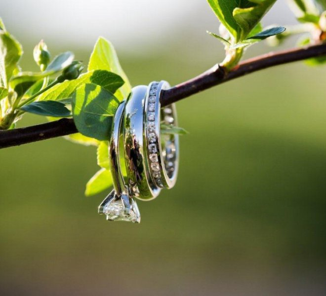 Three wedding rings hanging on a branch at PineCrest